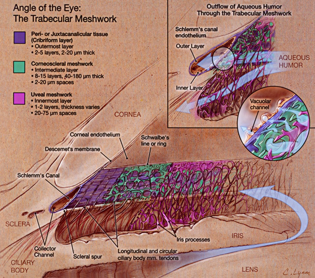 ME:120.751 :: Ophthalmological Illustration – Art as Applied to Medicine