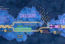CRSPR-CASCADE