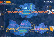 Snip vs. Shred: CRISPR-Cas9. Illustration: Jennifer E Fairman, MA, CMA, FAMI. © JHU 2015