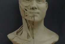 Head and Neck Ecorche. Oil Clay. Illustration © Christopher Smith