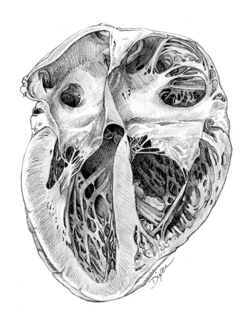 ME:120.719 :: Illustrating Anatomy – Art as Applied to Medicine