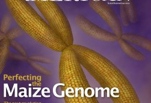 Perfecting the Maize Genome. Cinema 4D and Photoshop. Illustration © Katelyn McDonald