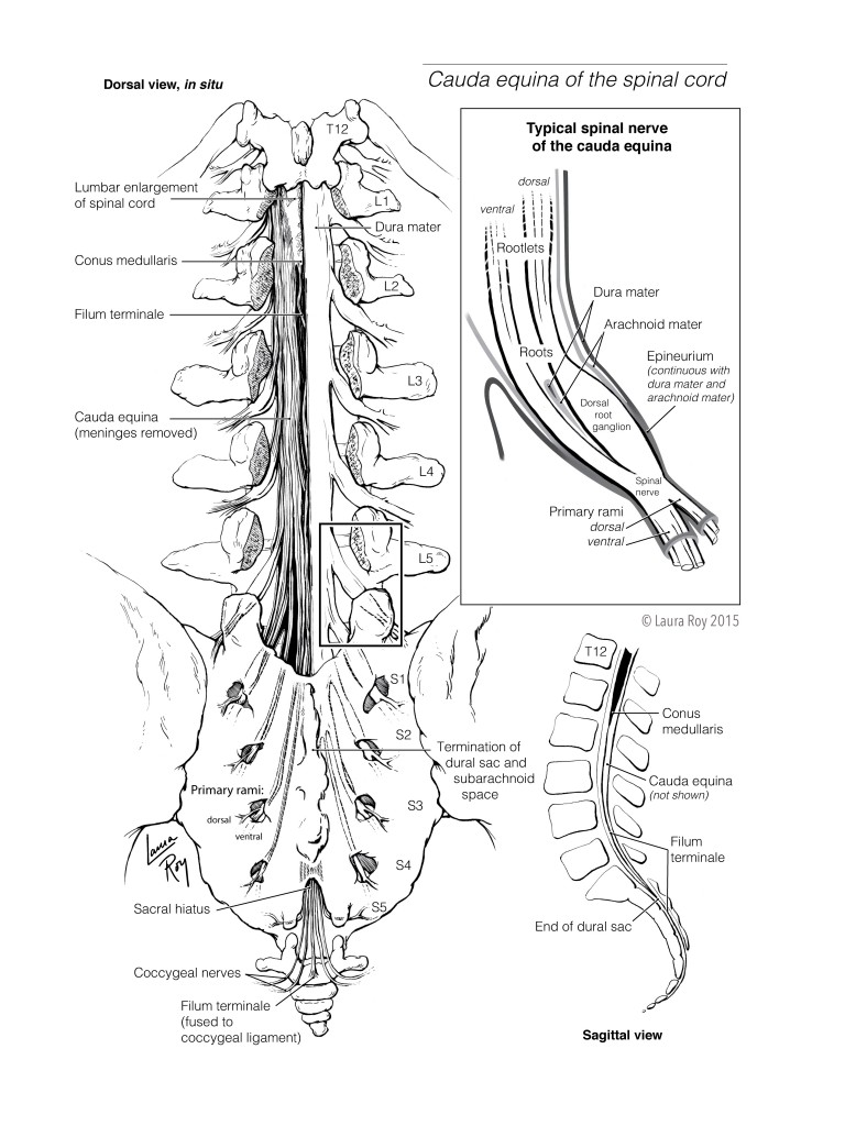 Johns Hopkins Spinal Cord Diagram Find Wiring Diagram