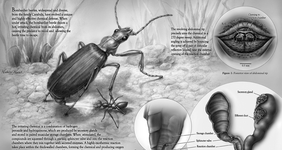 Chemical Defenses of Arthropods