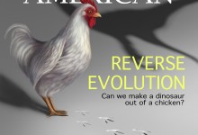 Editorial - Reverse Evolution: Can we make a dinosaur out of a chicken. Illustration © Samantha Welker