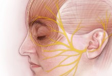 Anatomy of the Facial Nerve. Graphite and Adobe Photoshop. Illustration © Jennifer E. Fairman, CMI