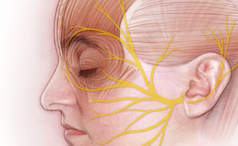 Anatomy Of The Facial Nerve Art As Applied To Medicine