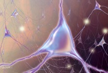 Neurons. 3DS Max and Adobe Photoshop. Illustration © Jennifer E. Fairman, CMI