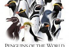 Penguins. Graphite and Adobe Photoshop. Illustration © Jennifer E. Fairman, CMI