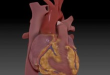 Digital Heart Model. ZBrush. Illustration © Michael Silver