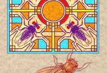 Montel Fruitfly. Colored pencil and Photoshop. © Johns Hopkins University, Artist: Tim Phelps, MS, FAMI