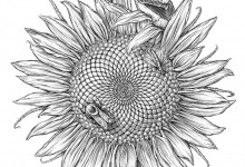 Sunflower Visitors. Pen and Ink. © Johns Hopkins University, Artist: Tim Phelps, MS, FAMI