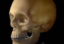 Skull Example for Technique Showcase, AMI 2013. ZBrush and Cinema 4D. Illustration © 2013 Veronica Falconieri